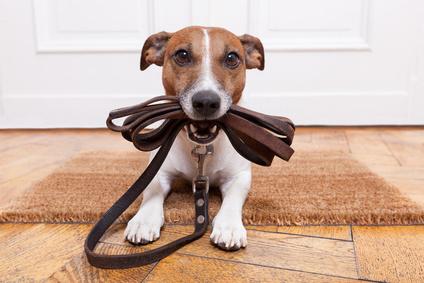 Hunde Service